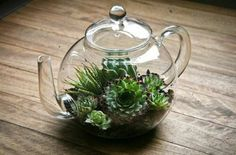 Terrariums can be made from any clear glass container - even this nice glass teapot!
