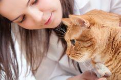 PetsMatter | Pet health: Why regular veterinary visits matter