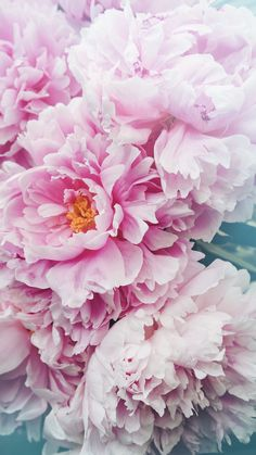 New Flowers Pink Wallpaper Rose Peonies Ideas Wallpaper Flower, Et Wallpaper, Flower Backgrounds, Spring Backgrounds, Amazing Flowers, White Flowers, Beautiful Flowers, Exotic Flowers, Purple Flowers