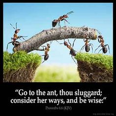 Go to the ant, thou sluggard; consider her ways, and be wise: – Proverbs (KJV) from King James Version Bible (KJV Bible) Proverbs 6, Chinese Proverbs, Proverbs Verses, Blockchain, Plus Belle Citation, Third Grade Science, Le Management, A Course In Miracles, King James Bible