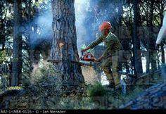 An African lumberjack ...
