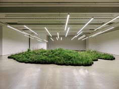 linda tegg plants a field of wild grasses inside jil sanders HQ for milan design week Fashion Installation, Light Installation, Art Installations, Milan Design, Design Trends, Jil Sander, Urban Flora, Wild Grass, Australian Artists