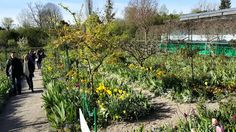 Garten Claude Monet