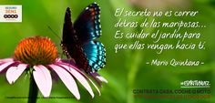 Gran frase #frases #motivación #coaching #optimismo