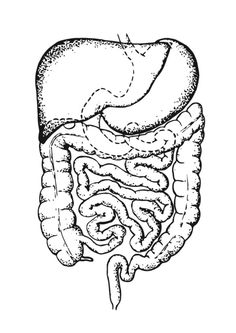 coloring page intestines - Brain Coloring Pages To Print