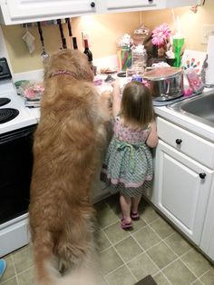 Working together to get the cupcakes! That's what I call an #acfbflf (best four-legged friend).