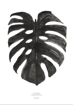 https://cdn.shopify.com/s/files/1/0761/8053/products/Monstrea_deliciosa_black-by-garmi_1024x1024-botanical-trend-art-print_b4c52cb8-a7b9-4707-b9ba-9ce46c22106e.jpg?v=1432566043