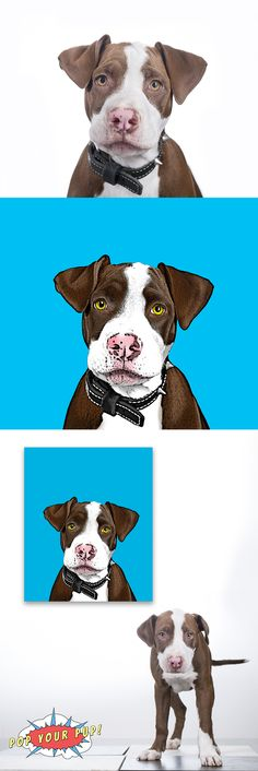 Custom Pop Art of your pet hand stretched on Premium canvas! www.popyourpup.com Use code pin15 for 15% off of your order