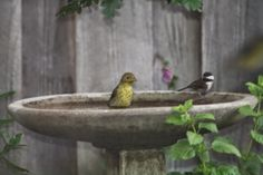 The Green Phone Booth: Unpaving Paradise: How to Start a Wildlife Garden