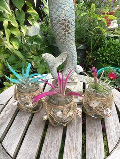 Seashell Jar Air Plant Pots, Air Plants, SW Florida Sea Shells, Sea Decor, Mermaid Decor, Seashellcraft, Airplant, Airplants