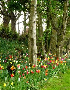 Tulips around the trees