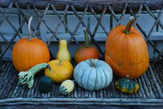 ~*- Gresskar -*~ (Amariel of the Woodlands) Some of the pumpkins I bought October 2014 October 2014, Pumpkins, Gardening, Vegetables, Food, Blogging, October, Lawn And Garden, Essen
