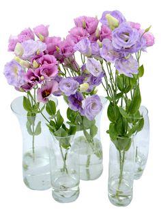 Wedding and party decoration Безплатна доставка на цветя в София, България
