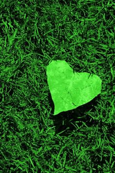 #green #heart #photography #colors