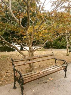 Самотна пейка в парка – ПЪСТРИ МОМЕНТИ
