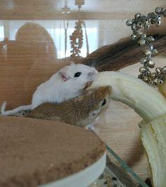 Super Cute Animals, Gerbil, Rodents, Lakes