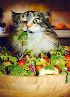 My sentiments exactly when I eat salad.....