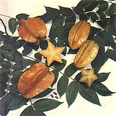 How to take care of a Star Fruit Tree (Carambola)