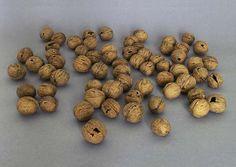 """Burkard Blümlein   L'inutile """"Des coquilles de noix cassées ont été recollées méticuleusement."""""""