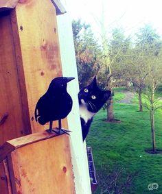 Fun | 24 schattige katten die je wel kunt opvreten