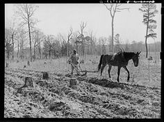 Plowing in the cut-over land near Marshall, Texas