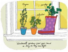 How to Start a Windowsill garden | The Edible Schoolyard Project