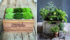 Plantes dans des caisses a vin