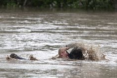 What Love Looks Like: Man and Cat Swim to Safety in the Alberta, Canada, Flood. Read the story at Caster.Com 6/22/2013