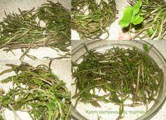 Δεν γνωρίζω αν γνωρίζετε τις αβρωνιές. Είναι φυτό που συναντάται σε όλη τη νότια Ευρώπη και βέβαια σε ολόκληρη την Ελλάδα. Τα ονόματά του ανά την Ελλάδα είναι: Αβρωνιά, αβρουνιά, βρυωνιά, οβριά, αδρανιά, ενώ η επιστημονική του ονομασία είναι tamus communis.  Η φωτογραφία από εδώ Είναι γνωστό από την …