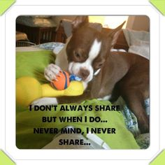 Never mind, I Never Share... ❤❤❤ from: http://bostonterrierworld.com/never-mind-i-never-share/