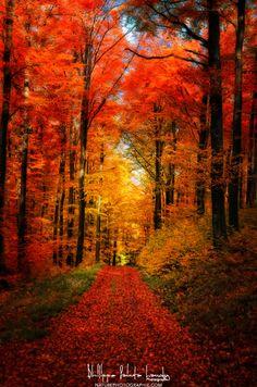 Forest Garden ~ Autumn, Strasbourg, France by Philippe Sainte-Laudy~~