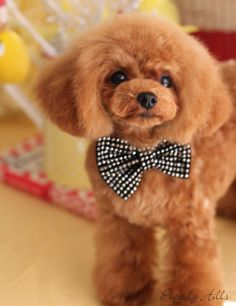 ♥ I'm ready for my date too, but, do I look pretty?..........................
