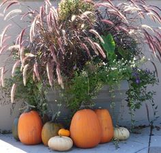 Container Garden Pictures