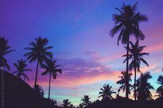 Stock photo of Summer silhouetted palm trees pattern during beautiful purple sunset by Wizemark Desktop Wallpaper Summer, Aesthetic Desktop Wallpaper, Tree Wallpaper, Purple Wallpaper, Wallpaper Backgrounds, Macbook Wallpaper, Computer Wallpaper, Palm Tree Background, Sunset Background
