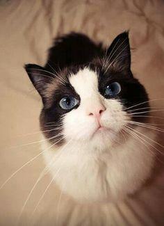 No entiendo porque no puedo tomarles fotos así a mis gatos,,, también son hermosos!