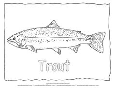 trout fish coloring pages - rainbow trout drawing template external anatomy of the