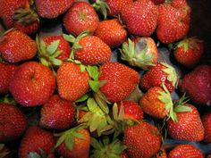 How to Enjoy Tasty Cold Climate Strawberries and Book Giveaway