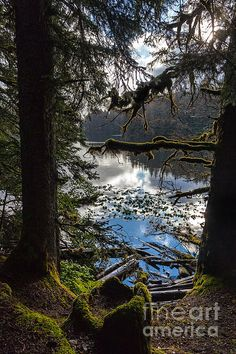 Mystic View - photograph by Steven Reed #stevenreed #landscapephotography