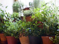 Swap a Few Houseplants