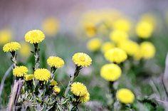 wild flower by FerryTjan
