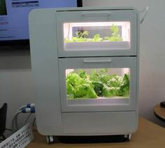Vegetable factory for home