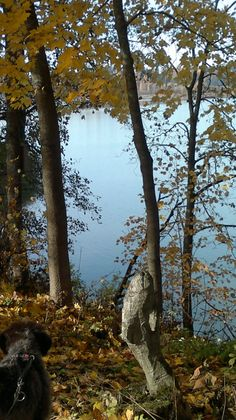 Autumn, southern Finland