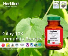 #Herbline #Giloy 10X is a new product in a #wellness range Easydose has multiple health benefits as Giloy is a universal herb that boost immunity, treat fever, reduces signs of aging, help fighting respiratory issues and arthritis problem. #healthyhabits #madeinhimalayas