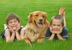 If youre looking for the best family dog here are ten naturally kid-friendly dog breeds. If youre looking for the best family dog here are ten naturally kid-friendly dog breeds. Best Dogs For Kids, Best Dogs For Families, Family Dogs, Child Friendly Dogs, Friendly Dog Breeds, Low Energy Dogs, Golden Retriever Training, Photos With Dog, Family Photos