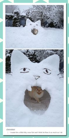 Kitty Snow Fort winter season Cat memes - kitty cat humor funny joke gato chat captions feline laugh photo