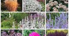 Een blog over een tuin en tuinieren op zandgrond / droge grond. Lees hoe je de bodem kunt verbeteren en welke planten en heesters je kunt kiezen. Dream Garden, Animal Shelter, Natural Stones, Eco Friendly, Flora, Planters, Backyard, Outdoor Structures, Concept