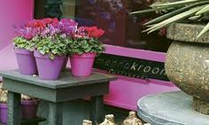 Image result for menno kroon flower shop