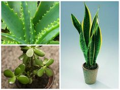 Plants Which Are Safe For Your Bird Aviary