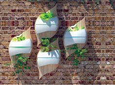 Leaf hydroponic system on wall