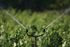 vintage-style brass sprinkler with a rotating head, via Belgian company Tradewinds.